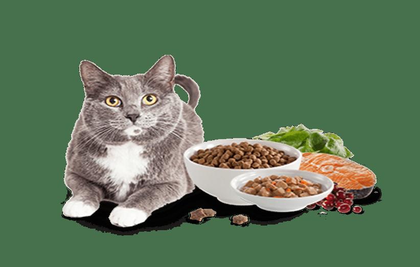 بهترین غذای گربه ایرانی