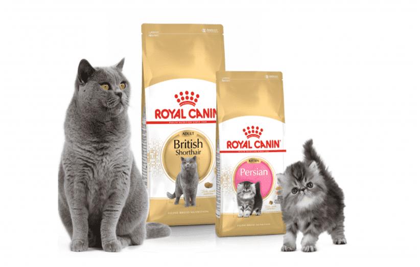 غذای رویال کنین گربه