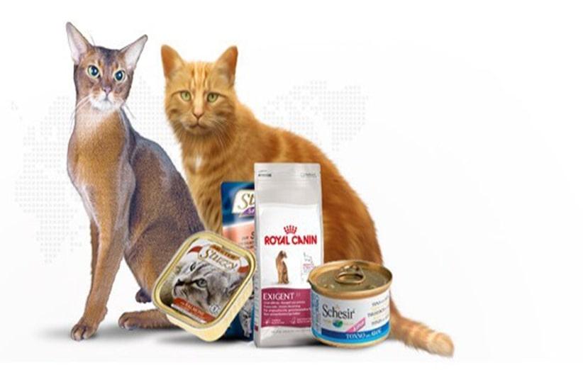 فروشگاه غذای گربه