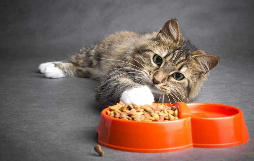 غذای گربه پرامی