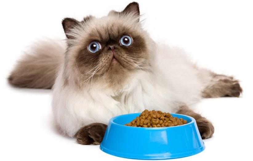 غذای گربه پرشین رویال کنین