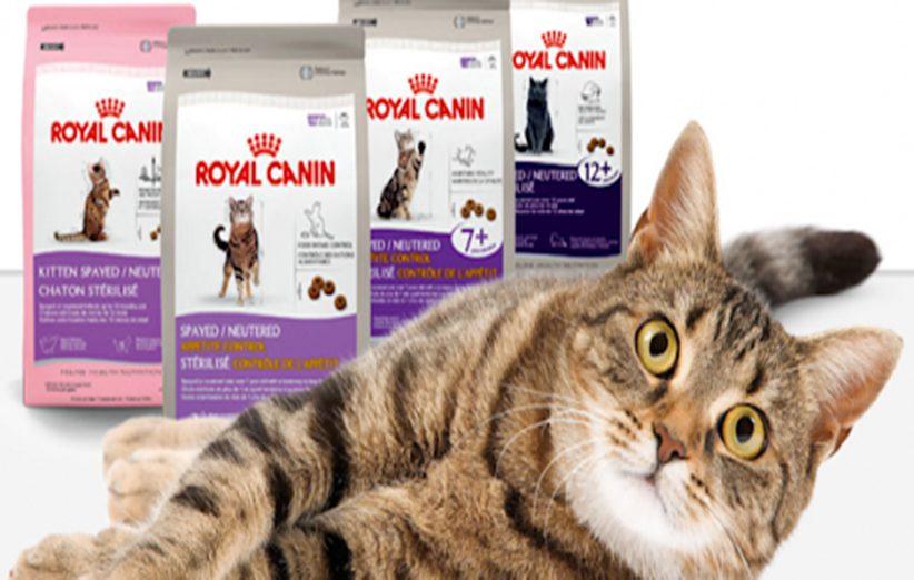 فروش آنلاین رویال کنین گربه