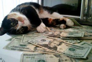 قیمت غذای گربه رویال کنین