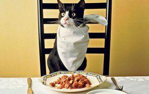 غذای گربه رفلکس طعم مرغ
